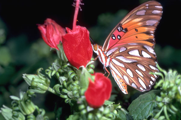 Stay west to check out The Peveto Bird & Butterfly Sanctuary