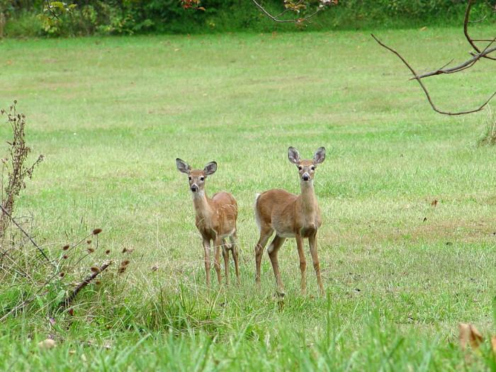 3. These deer