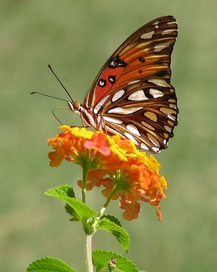 1. Butterflies
