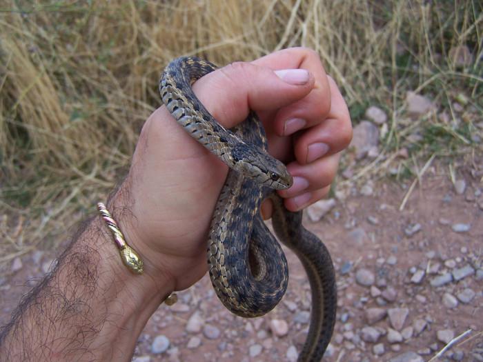 10) Garter Snake