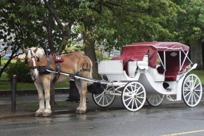 6. It is illegal for a car to pass a horse drawn carriage.