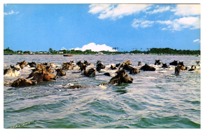 10. Chincoteague and Assateague Isalands: The Pony Swim