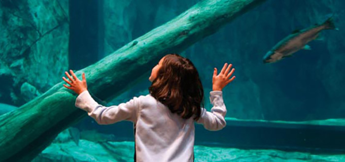 9. You can't exclude an aquarium when it's as fun as this one. Great Lakes Aquarium in Duluth is fantastic for the whole family!