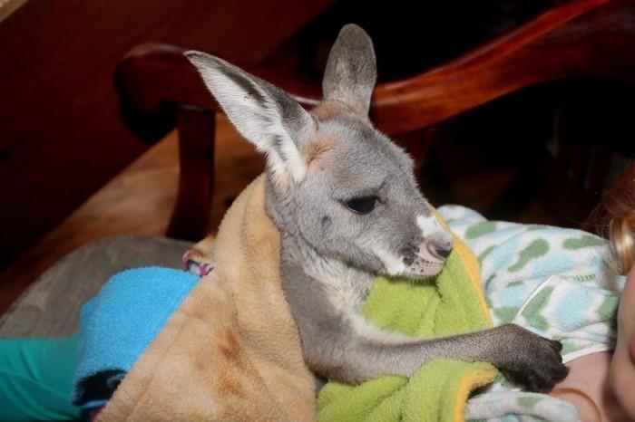 5. Outback Kangaroo Farm, Arlington