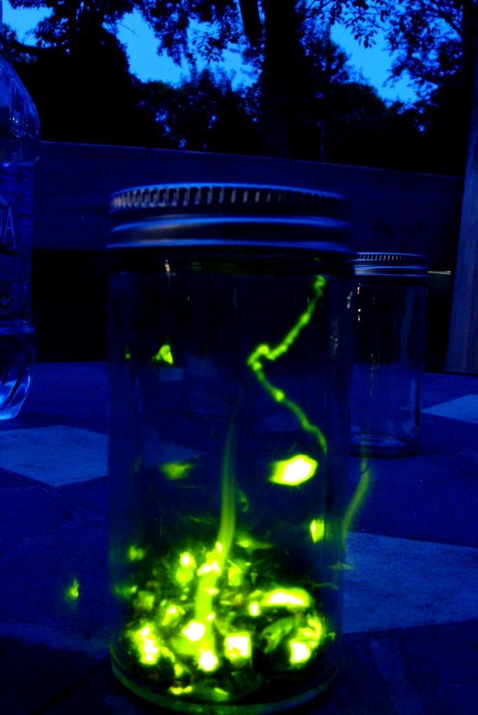 11. Lightning bugs LIKE living in jars.