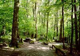4. Bear Heaven campsite in Monongahela National Park