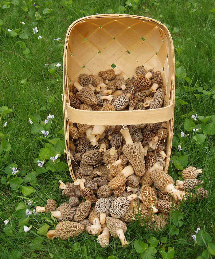5. Morel mushrooms