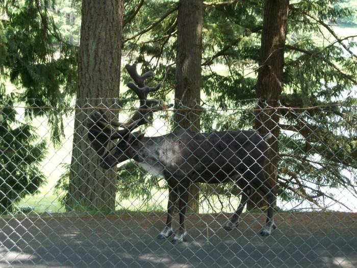 3. Northwest Trek Wildlife Park, Eatonville