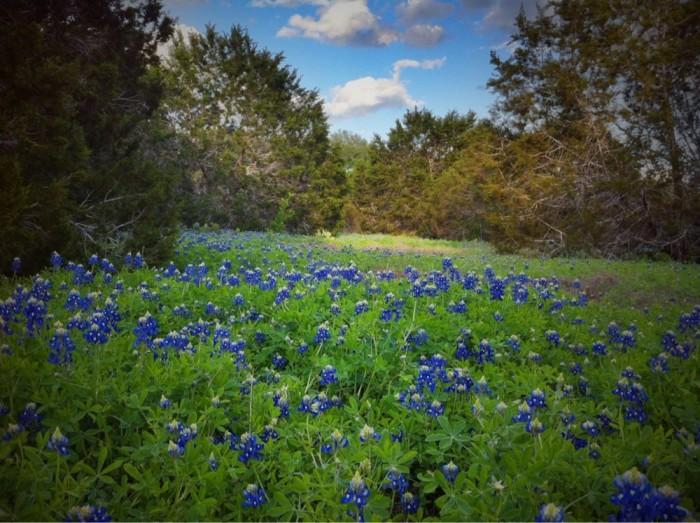 6) St Edwards Park (Austin)
