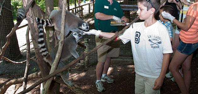 4. The Good Zoo at Oglebay in Wheeling