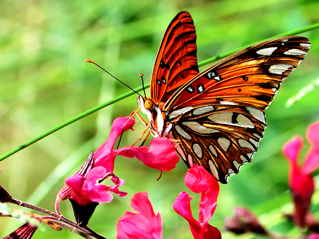 18. The butterfly is simple yet striking.