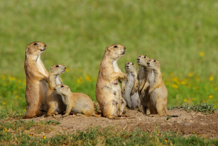 1. These prairie dogs are adorable.
