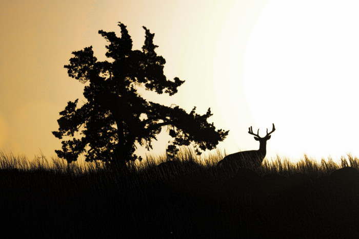 2. The silhouette of this deer in the morning was captured perfectly.