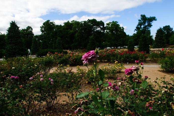 8. Tulsa Rose Garden