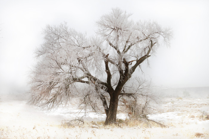6. A frigid and frozen tree in the heart of winter.