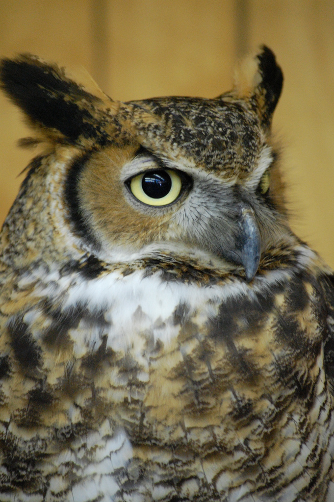 4. This owl