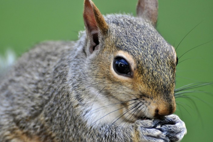 2. You can't worry a squirrel in La Crosse, WI