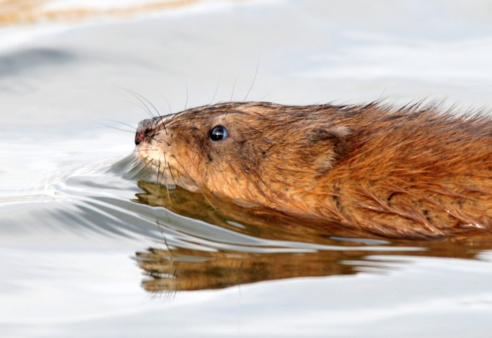 5. It's illegal to blow up a muskrat house
