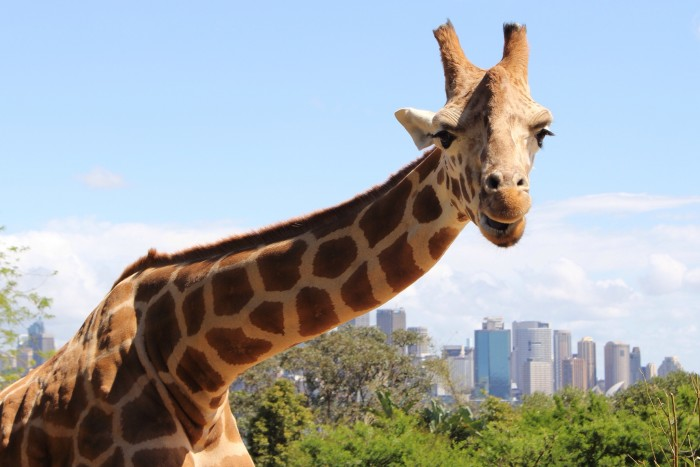 4. You cannot fish while sitting on a giraffe's neck in Chicago.