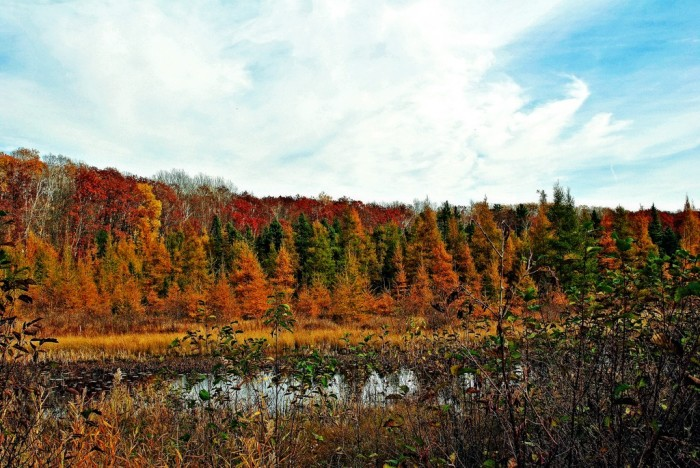 2. Nowhere are fall trees more beautiful than in Wisconsin.