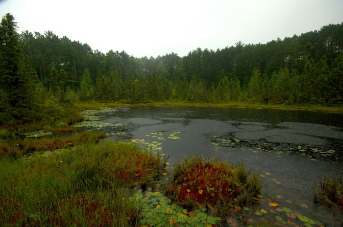 6. If life has you bogged down...visit a beautiful bog!
