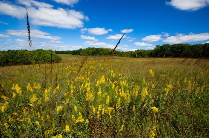 11. Explore the great Wisconsin prairies.