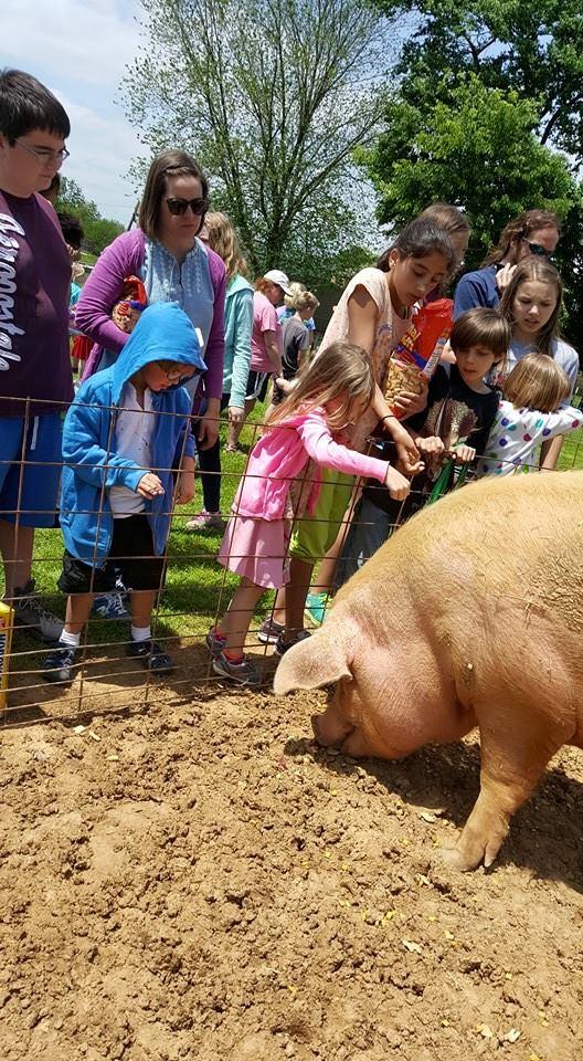 3. PIGS Animal Sanctuary