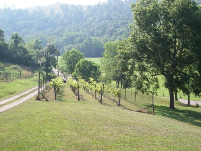 ronae vineyards
