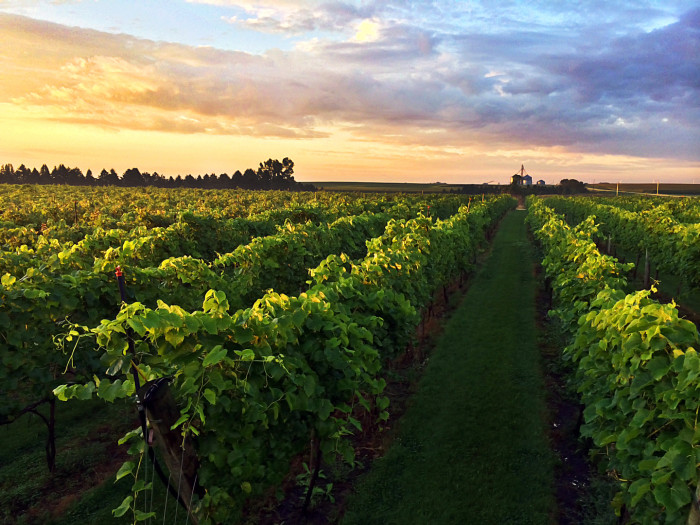 1. Round Lake Vineyards & Winery. You'll love lakeside wine drinking at this gorgeous winery.