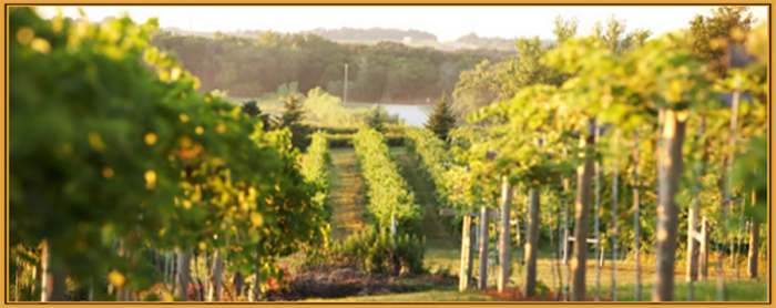 15. Salem Glen Winery has beautiful scenery, great wine, and even live music on Saturdays.
