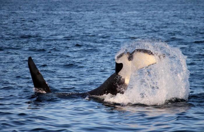 7. San Juan Safaris Whale Watching