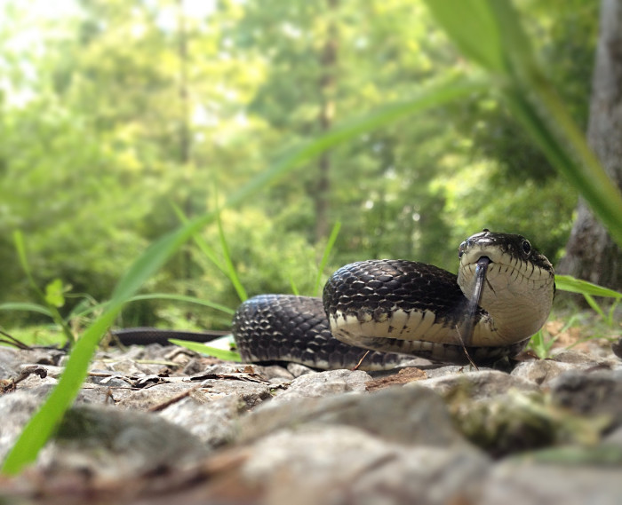 11. This snake
