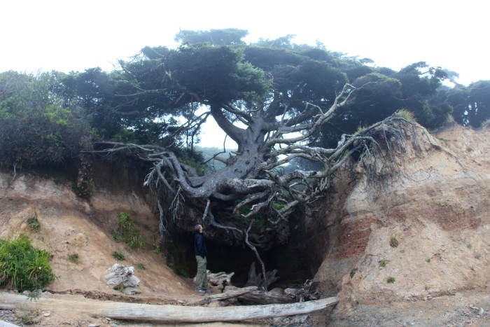 15. Tree Cave in Kalaloch, Olympic National Park