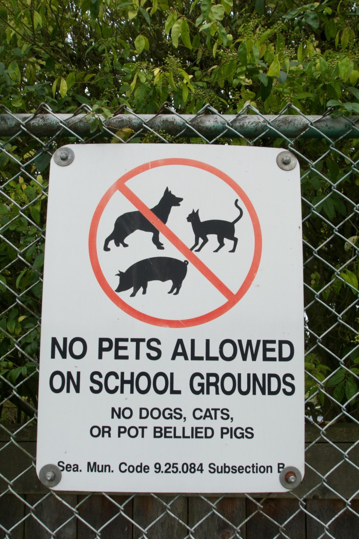7. Guess I'll leave my pig on the bus then...