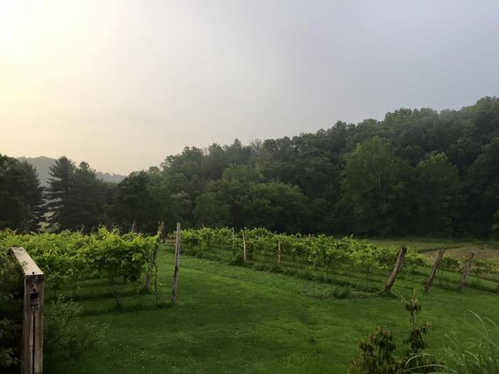 9. Vu Ja De Vineyards