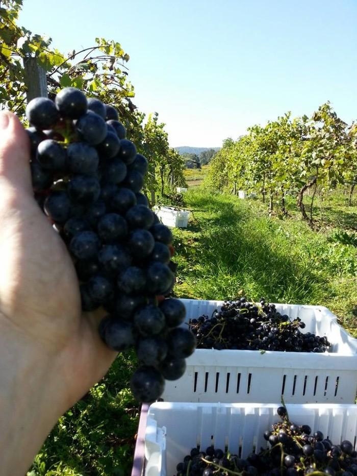 10. West-Whitehill Winery