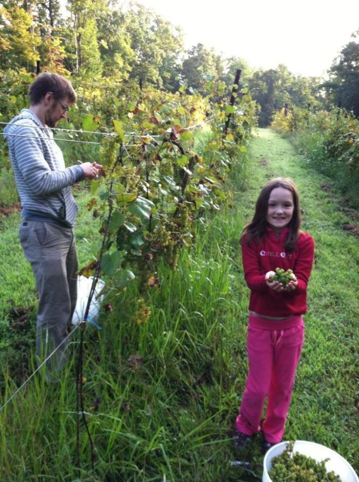 8. Winetree Vineyards