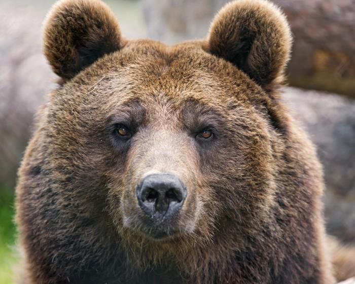 7. Bears