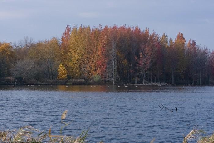 5. Evergreen Lake (Bloomington)