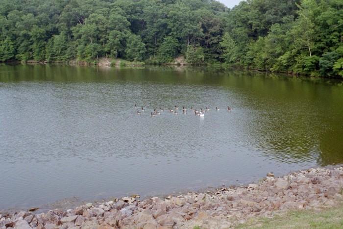 8. Lake Murphysboro