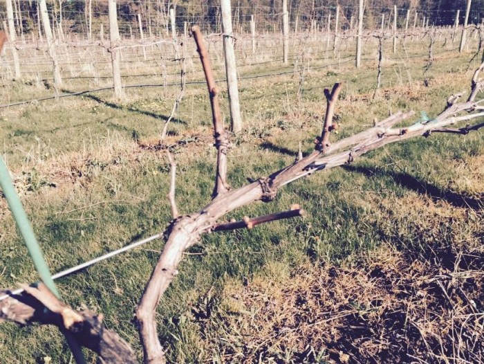 1. Cold Country Vines and Wines (Kewaunee)