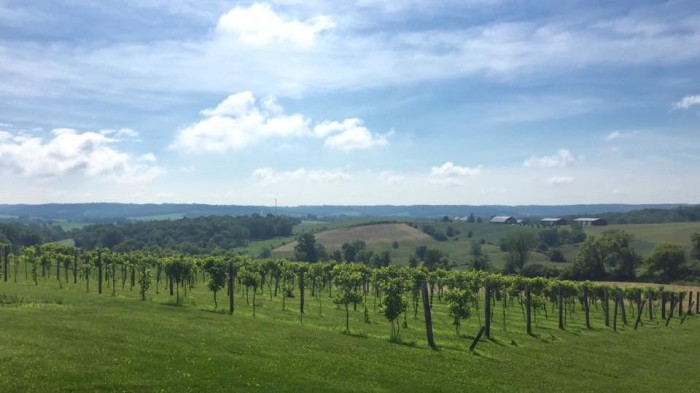 3. Fergedaboutit Vineyard and Winery (Hanover)