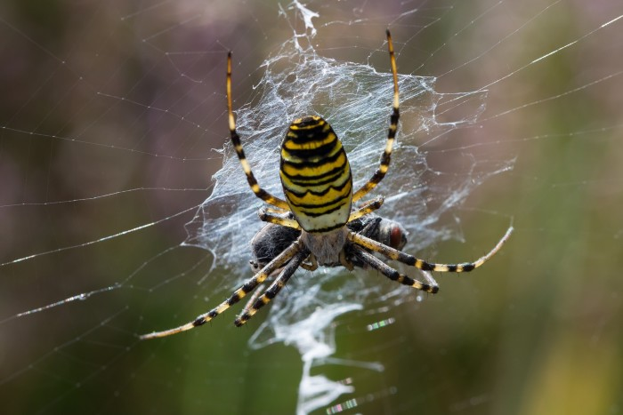 5. Black and Yellow Garden Spider