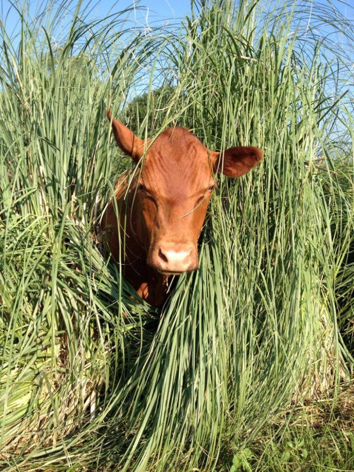 5) Mahaffey Farms