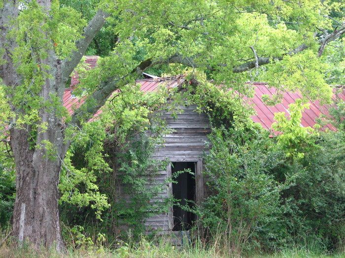 11. Located in Starkville, this barely visible house is definitely a bit too secluded.