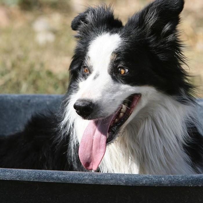 7) Soldier Hollow Sheepherding Dog Trials