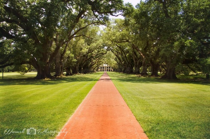 6) Oak Alley Plantation -- Interview with the Vampire
