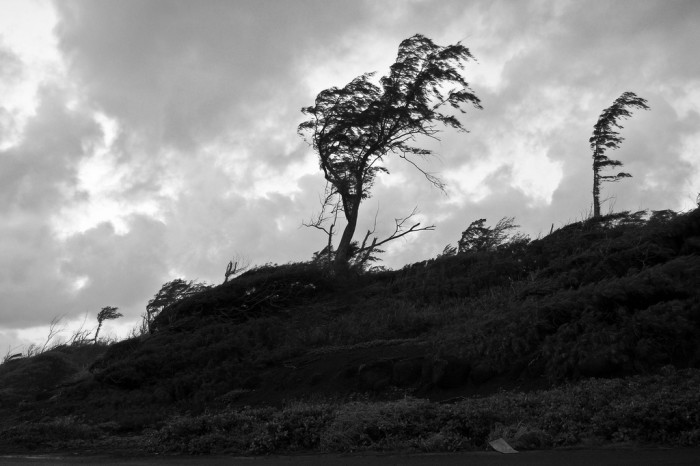 12) There is no shortage of creepy trees across Hawaii.