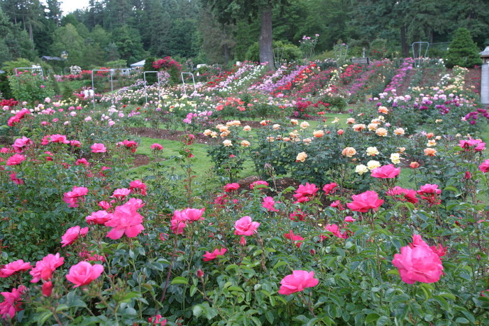 Here are the most beautiful gardens you 39 ll see in oregon for Portland international rose test garden