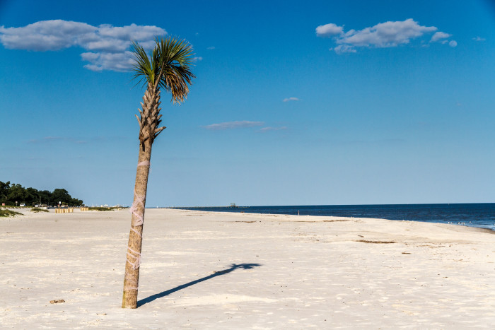 12. You love diverse surroundings. Mississippi's terrain includes a coastline, a delta, the piney woods, and the northern hills – four completely different worlds.